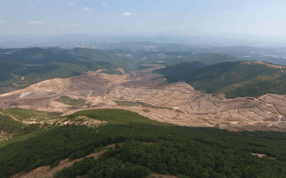 'Kaz Dağları'nda 347 bin ağaç kesildi'