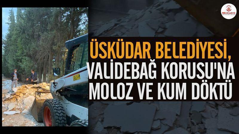 Erdoğan'ın partisi bir doğa koruma alanını yok ediyor